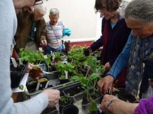 Digging in at the seedling swap