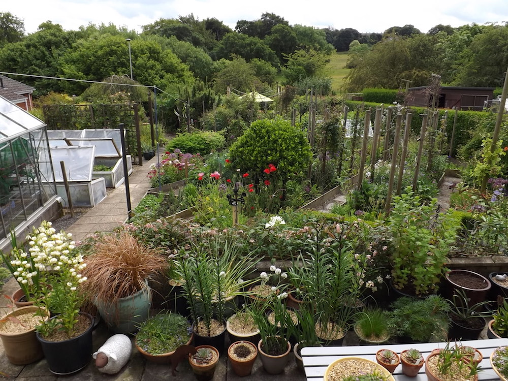 Marie Robson's Garden