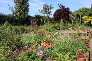 Maggie Duguid's Garden